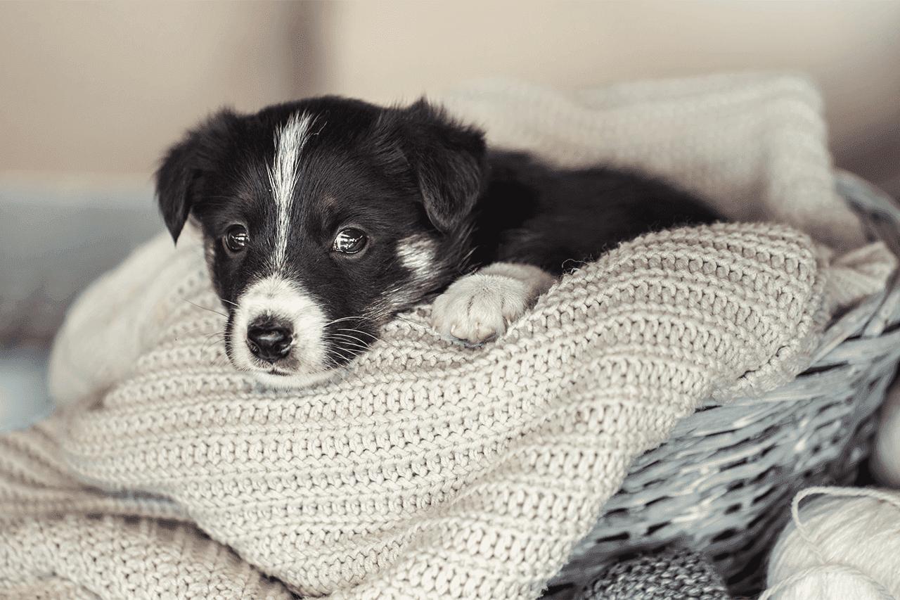 חרדת נטישה אצל כלבים לאחר הסרת סגר הקורונה
