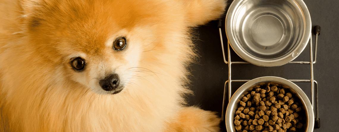 אוכל מומלץ לכלבים | מזון לכלבים במודיעין